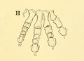 The Osteology of the Reptiles-209 dfg ghj dertg ftgy vfghg fgh t.png