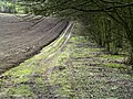 The Path down to Drewton Dale - geograph.org.uk - 722769.jpg