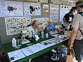 The UA Insect Collection booth - Flickr - treegrow.jpg
