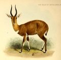 The book of antelopes (1894) Tragelaphus roualeyni.png
