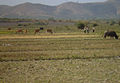 The central highlands in daklak Vietnam1.jpg