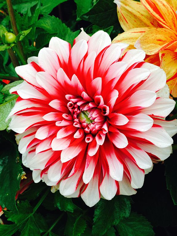 File:The most beautiful flower ever.jpg - Wikimedia Commons