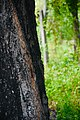 The part of the tree.jpj.jpg