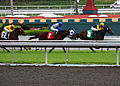 Thoroughbred Horse Race (3445325751).jpg