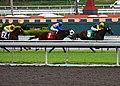Thoroughbred Horse Race (3445325751).jpg
