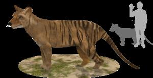 Thylacinus potens - Restoration