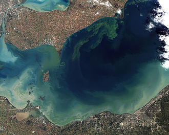 Algal bloom - Taken from orbit in October 2011, the worst algae bloom that Lake Erie has experienced in decades. Record torrential spring rains washed fertilizer into the lake, promoting the growth of microcystin producing cyanobacteria blooms.