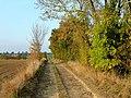 Track from Groveleys - geograph.org.uk - 1535873.jpg