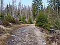 Trail near Rotenbeek 04.jpg