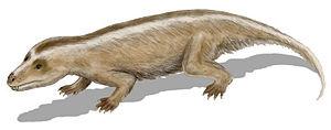 1884 in paleontology - Tritylodon