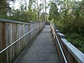 Troy Springs SP path01.jpg