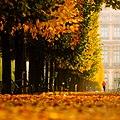 Tuileries 01.jpg