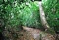 Tunbridge Wells Circular Path - Beech Wood - geograph.org.uk - 1493311.jpg
