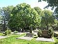 Tusenåriga linden vid Torslanda kyrka 4337.jpg