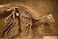 Tyrrell Hypacrosaurus.jpg