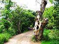 Un viejo tronco - panoramio.jpg