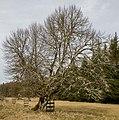 Unterhölzer Wald-3449-IridientEdit.jpg