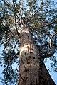 Up the tree - panoramio.jpg
