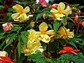 Urn planter flowers at Easton Lodge Gardens, Little Easton, Essex, England 2.jpg