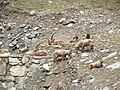 Valle d'Aosta-Rhêmes-Notre-Dame-DSCF6814.JPG