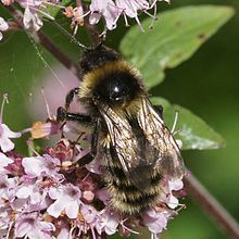 honey bees and flowers relationship trust