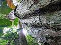 Vegetación de la Reserva de la Biosfera La Amistad Panama (RBLAP) 29.JPG