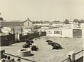 Venta de Antequera, apartado de corrida (Abril 1955).1.jpg