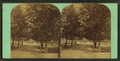 View of a man on tree lined path, from Robert N. Dennis collection of stereoscopic views.png