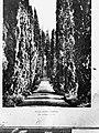 Villa Giusti Verona - The Cypress Alley (Town Planner's photograph)(GN01605).jpg