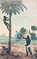 Vin de palme-1821.jpg