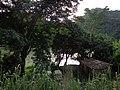 Vivienda frente al Río Coroico.jpg