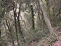 Voltant de Vallvidrera 174-7454 IMG.JPG