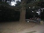 Vorontsovskyi Park (18.07.13).jpg