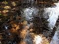 Vylet k Cernemu jezeru Sumava - 9.srpna 2010 132.JPG