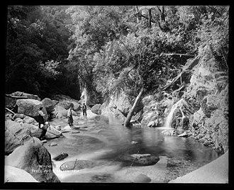 Wainui Falls - Image: Wainui River Tyree Collection 1