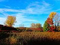 Warner Park during Fall - panoramio (1).jpg