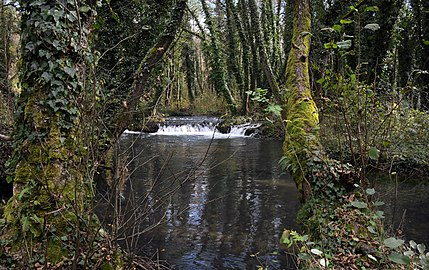 Water and forest PZPP016.jpg