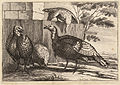 Wenceslas Hollar - Four turkeys (State 2).jpg
