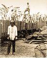 Whale bones at Walvisbaai circa 1920-1930 b.jpg