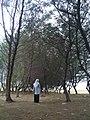 Whisper of Pine.jpg