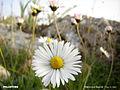 White flowers4.jpg