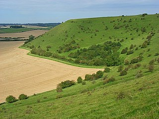 White Sheet Hill Hillfort in Wiltshire