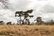 Wijnjeterper Schar, Natura 2000-gebied provincie Friesland 27.jpg