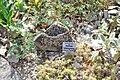 Wikipedia 13. Fotoworkshop Botanischer Garten Erlangen 2013 by-RaBoe 010.jpg