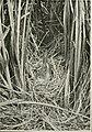 Wild nature's ways (1903) (14564090478).jpg