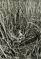 Wild nature's ways (1903) (14564091748).jpg