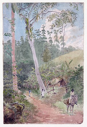 William Berryman - Plantain Walk by William Berryman, watercolor, ink, and pencil