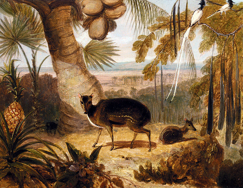 File:William Daniell - Musk Deer, And Birds Of Paradise.jpg