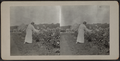 Woman looking at flowers, from Robert N. Dennis collection of stereoscopic views.png