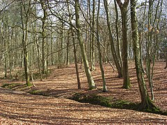 Woodland, Inkpen Common - geograph.org.uk - 1216965.jpg